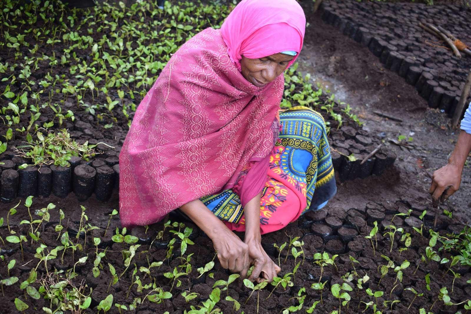 Tanzania ecosia aich15
